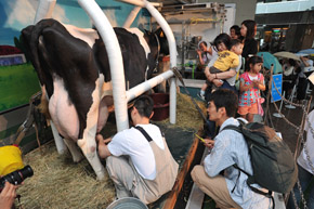 Japan's Milk Price Problem: the 30-year Challenge_サムネイル