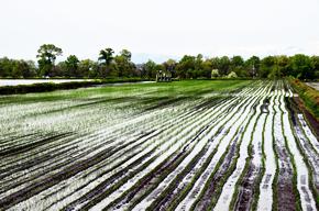 Upgrading Hokkaido Rice to 'First Class'_サムネイル