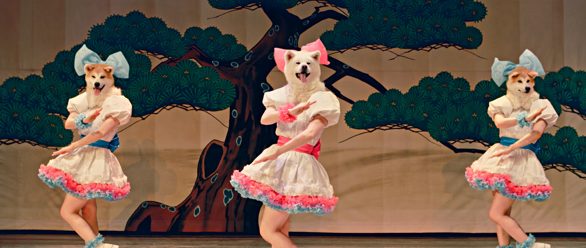 Fur Out! Canine Idols Woo(f) Tourists to Akita_thumb
